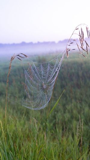 Nature Focus On Foreground Spider Web No People Beauty In Nature Growth Day Outdoors Field Close-up Fragility Web Plant Tranquility Grass Freshness Sky