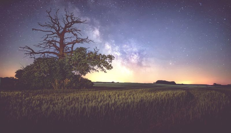 Tree Night Scenics Nature Tranquil Scene Star - Space Beauty In Nature Field Sky Tranquility No People Growth Outdoors Landscape Plant Milky Way Galaxy Space