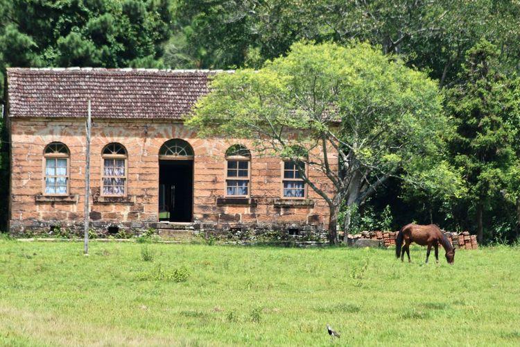 Rural scenary