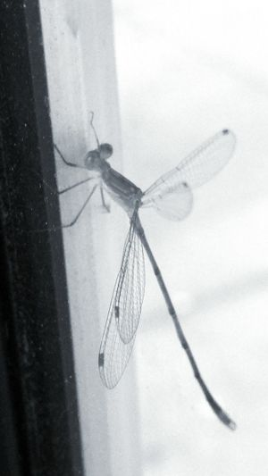 Dragonfly_of_the