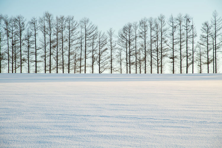 Bare trees on snow field against sky