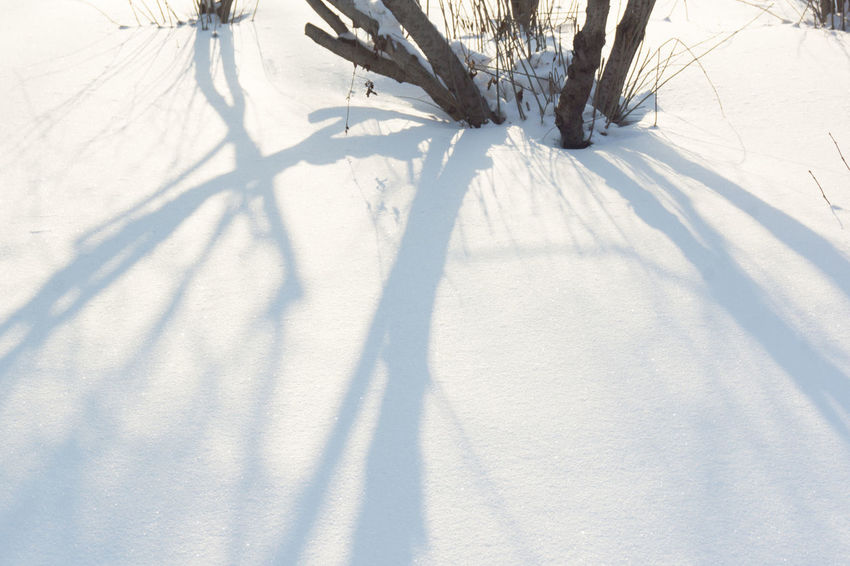Bare Tree Beauty In Nature Cold Temperature Day Field Landscape Nature No People Outdoors Shadow Snow Sunlight Tree Weather White Color Winter