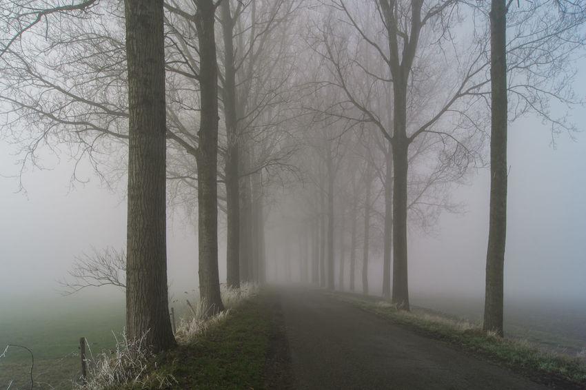 Landroad (Gouden Polderdijk) near Waterlandkerkje Sony A700 Fog Frost Hazy  Landscape Spooky The Netherlands Tree Tree Trunk Zeeland  Zeeuws Vlaanderen