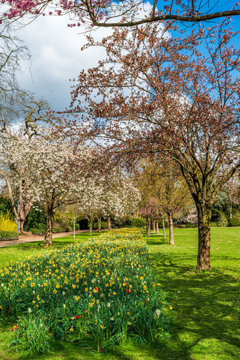 View of flowering plants and trees in park