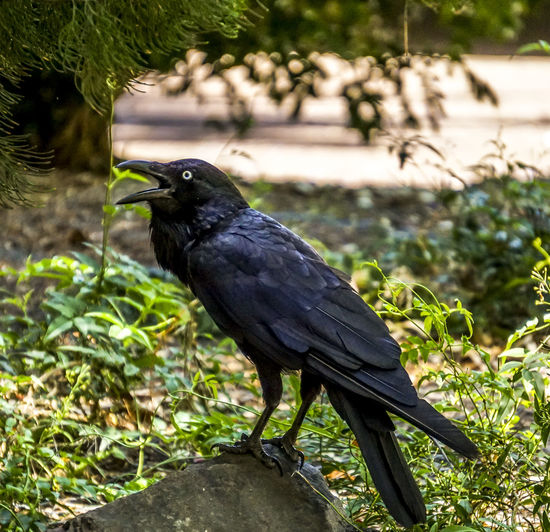 Birds Nature Wildlife Wildbird