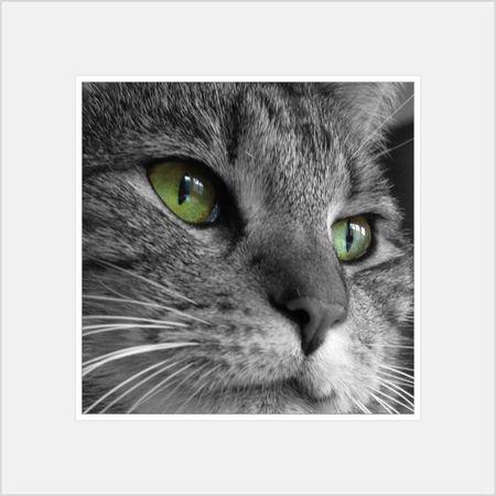 My Cat Colorsplash Canon Powershot N