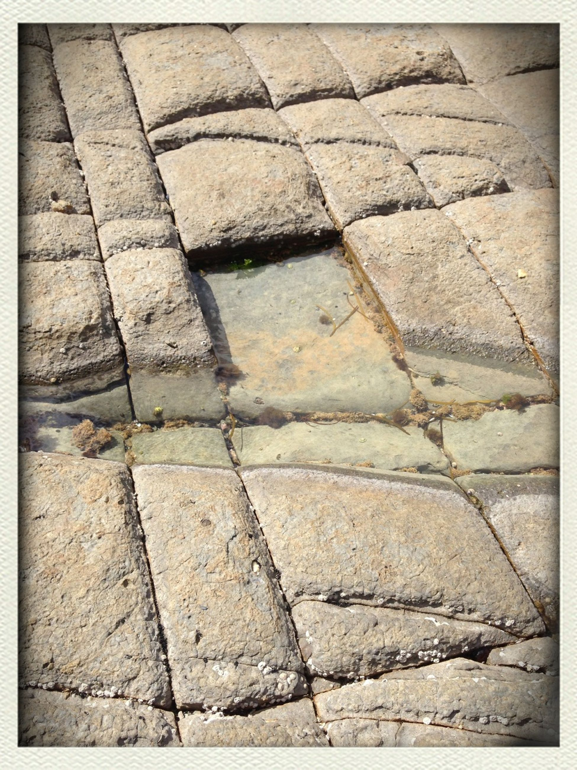 transfer print, full frame, backgrounds, cobblestone, auto post production filter, pattern, high angle view, paving stone, textured, footpath, street, sunlight, outdoors, no people, day, shadow, sidewalk, pavement, close-up, tiled floor