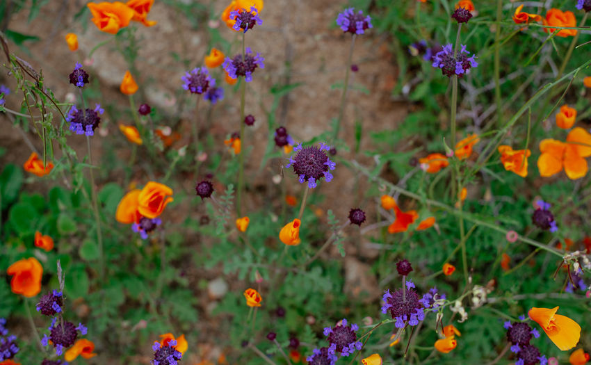 Close-up of flowering plants in field