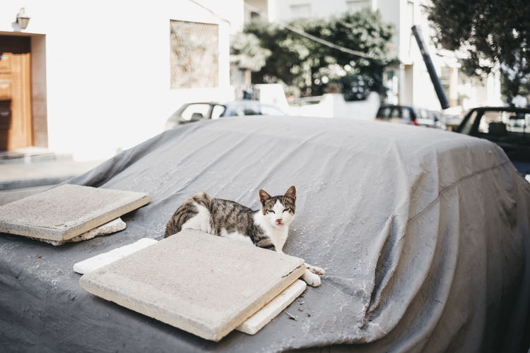 Animal Animal Themes Architecture Building Exterior Built Structure Cat City Day Domestic Domestic Animals Domestic Cat Feline Focus On Foreground Looking At Camera Mammal No People One Animal Pets Relaxation Vertebrate