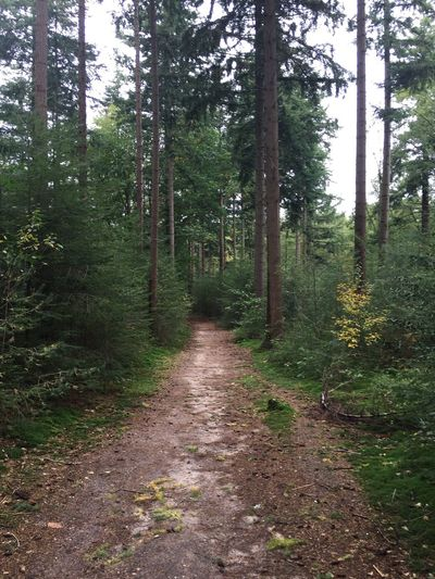 Baarnsebos Baarn Forest Nature Tree Tranquility Beauty In Nature No People