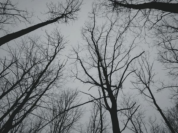 In The Forest Dark Forest Darkness The Dark Forest Nature Dying Treescollection Trees Forest Walk Sadness... Sad