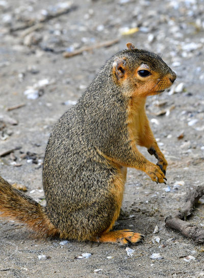 Close-up of squirrel sitting on rock