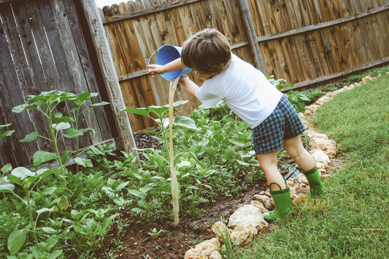 Backyard Grass Helping Plants Rain Boots Boy Casual Clothing Childhood Cute Domestic Family Life Full Length Garden Gardening Little Helper One Person Outdoors Real People Shorts Toddler  Water The Garden