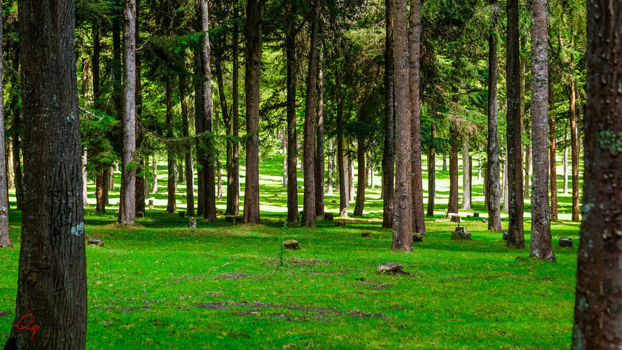 Green... Green Color Tree Animal Themes Animals In The Wild Beauty In Nature Day Domestic Animals Forest Forest Photography Forest Trees Grass Green Color Growth Landscape Mammal Nature No People One Animal Outdoors Scenics Tree Tree Trunk WoodLand