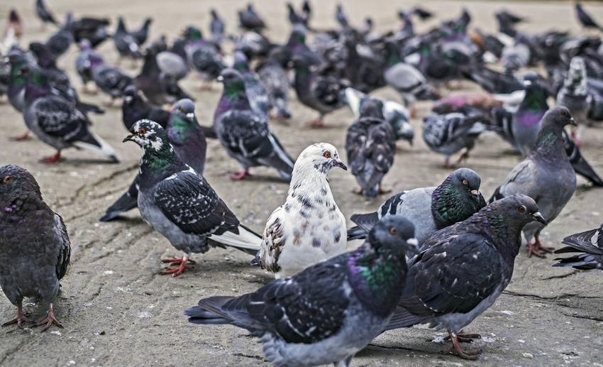 Close-up of birds on street