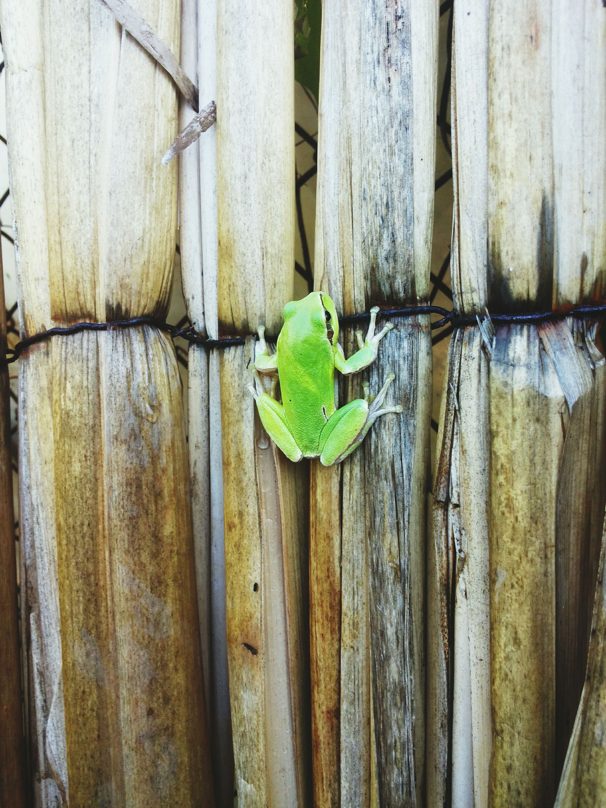wall - building feature, close-up, green color, wall, built structure, wood - material, architecture, textured, growth, weathered, plant, wooden, old, day, no people, leaf, outdoors, building exterior, pattern, fence
