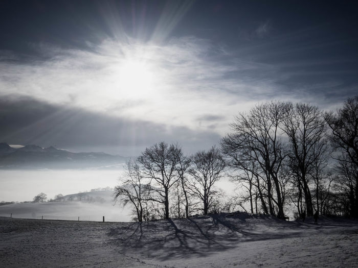 Walking on Belpberg Bare Tree Beauty In Nature Cloud - Sky Cold Temperature Day Landscape Nature No People Outdoors Scenics Sky Snow Sun Sunbeam Sunlight Tranquil Scene Tranquility Tree Winter