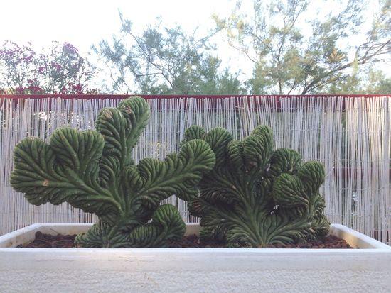 Plants Minimalism Cactus Brain Succulents