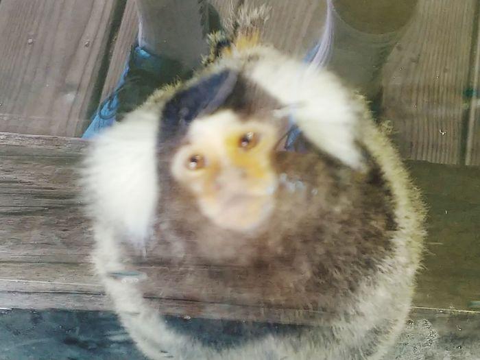 Bird Of Prey Bird Pets Owl Portrait Looking At Camera Domestic Cat Close-up