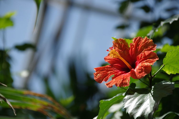 Beauty In Nature Close-up Flower Flower Head Focus On Foreground Fragility Freshness No People