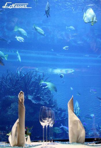 #alcohol #bossy #chilling #folloeup #animals #animal #pets #birds #wildlife #wild #cityscape #landscape #nature #sunset #lake #vacation #trip #city #downtown #reflectio #Aquarium #architecture #bridge #calatrav #cherry #church #cross #deck #Dubai #Food #medugorje #oldhouse #pamoukali #sea #seaside #skateboards #krooked #REAL #brickharbor #spain #tower #photography #tree #Tulips #Spring #Turkey #wine #love #drink #relax #winery#relax#longisland#wine#love