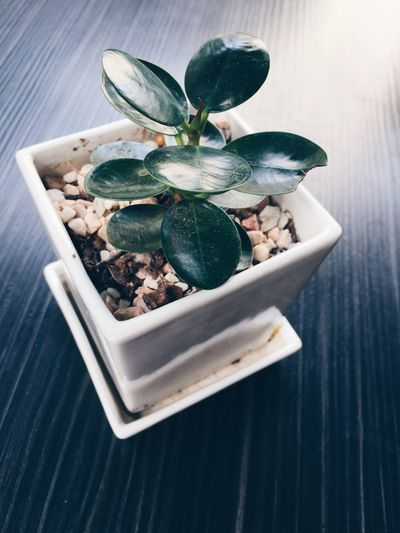 High angle view of plant on table