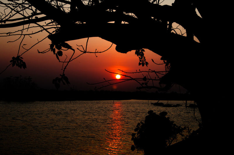 Beauty In Nature Branch Horizon Over Water Idyllic Nature No People Orange Color Outdoors Plant Reflection Scenics - Nature Sea Silhouette Sky Sun Sunset Tranquil Scene Tranquility Tree Water