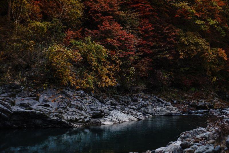 紅葉 Plant Tree Water No People Nature Beauty In Nature Tranquility Reflection Growth Scenics - Nature Lake Tranquil Scene Outdoors Autumn Change Waterfront Rock Day Solid