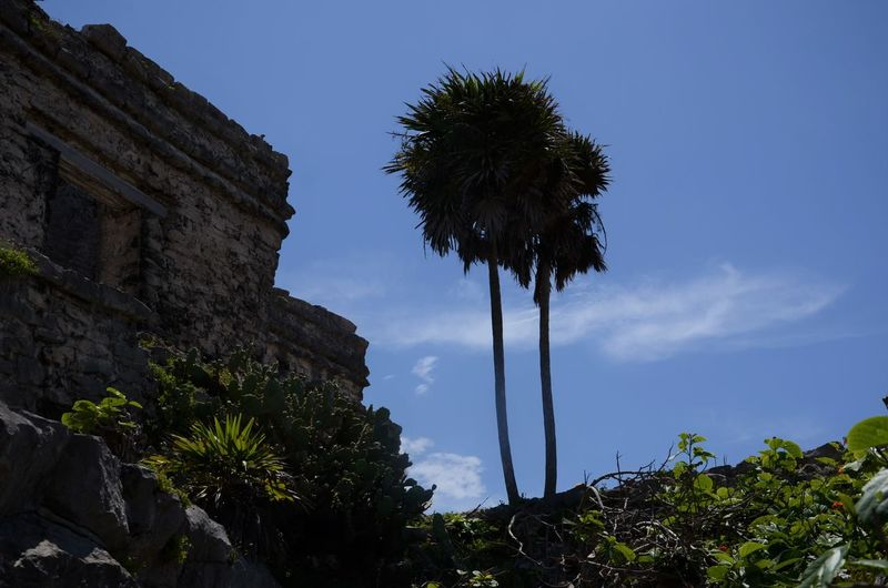 Sky Plant Low Angle View Palm Tree Nature Growth Architecture No People Built Structure Building Exterior Tropical Climate Day History The Past Outdoors Sunlight Travel Destinations Ancient Civilization Ruined Mayan Ruins Mayas Tourism Destruction Colonization