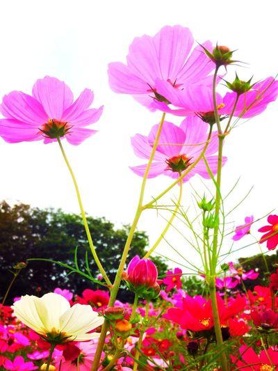 Pink Nature Flowers Beautiful