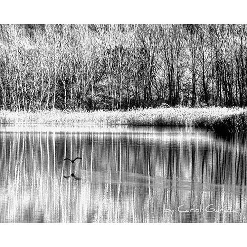 Ser libre cual ave y volar sin fronteras... Chumbea Amateurs_bnw Top_bnw Bnw_addicted Bnw_life Ok_bnw Bnw_captures Ok_catalunya Instantaniacat Descubriendoigers Descubreixcatalunya Bnw_addicted Bnwsplash_spain Total_water Total_Catalunya Total_bnw Clickcat Total_reflections Blackandwhite Blacknwhite_perfection Paisaje Thebest_capture_bnw Naturaleza Nature Relax reflexosdelmon be_one_bw be_one_nature