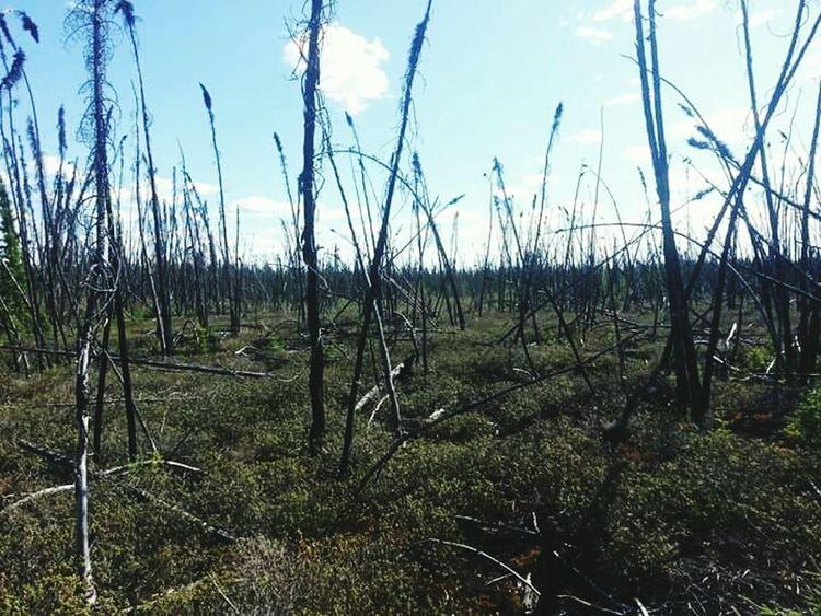Burnt Ominous Trees Fire?