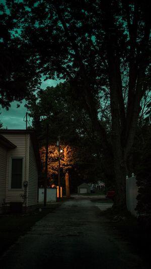 Night. Tree