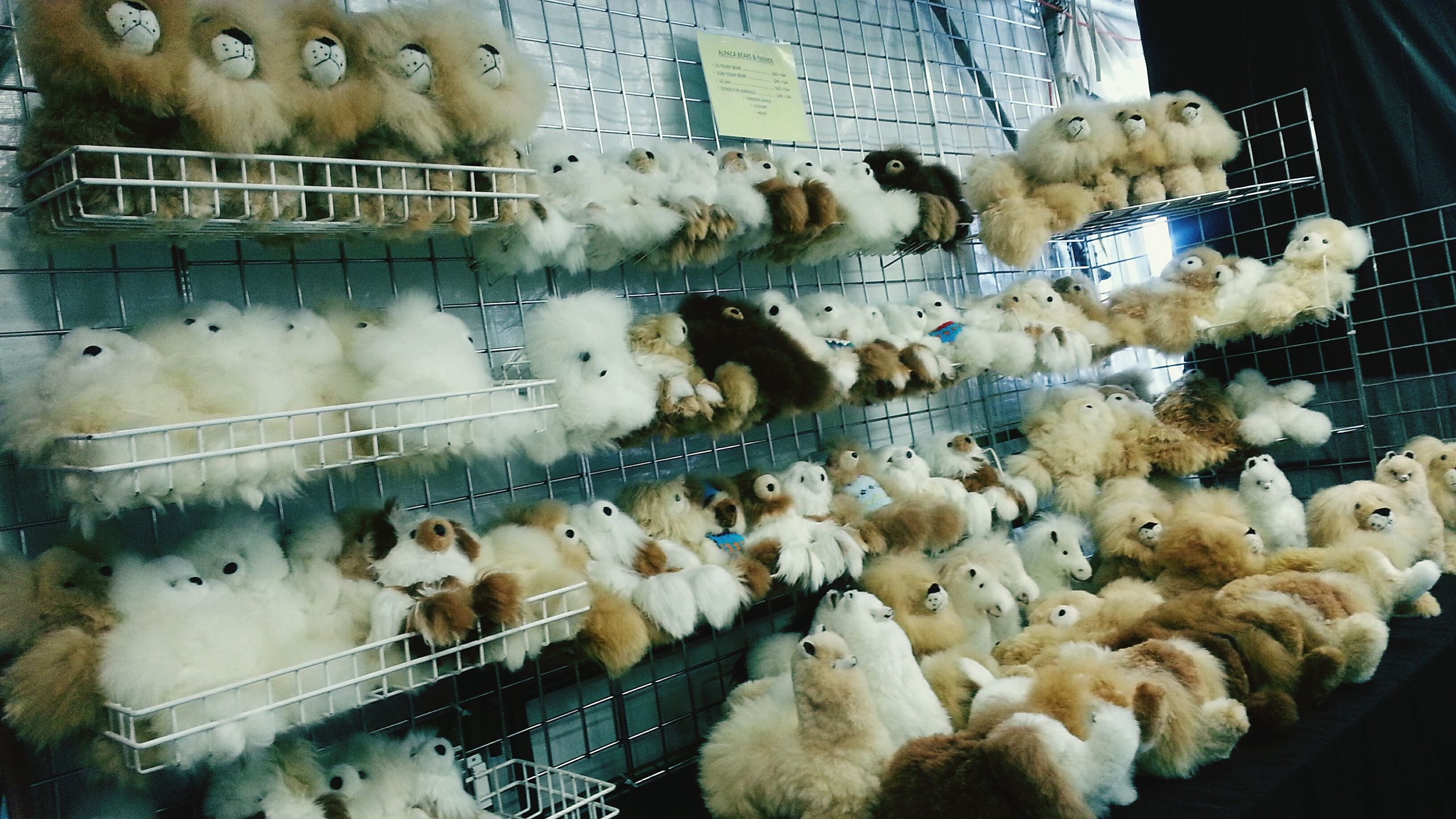animal themes, high angle view, bird, indoors, abundance, large group of objects, variation, day, food, fish, no people, white color, domestic animals, retail, in a row, medium group of animals, food and drink, wildlife