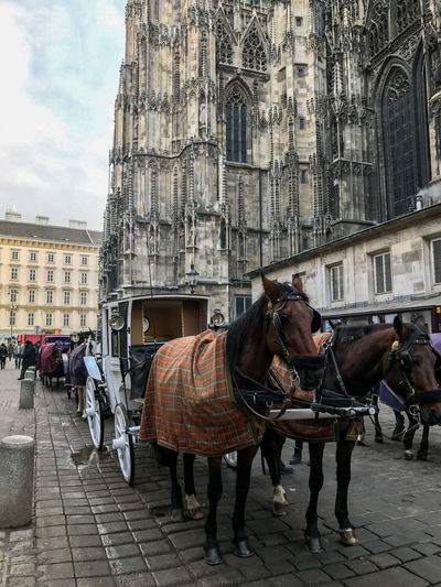 Horsedrawn carriages in Vienna Animal Animal Themes Animal Wildlife Architecture Building Building Exterior Built Structure Cart City Day Domestic Domestic Animals Herbivorous Horse Horse Cart Incidental People Livestock Mammal Outdoors Pets Vertebrate Working Animal