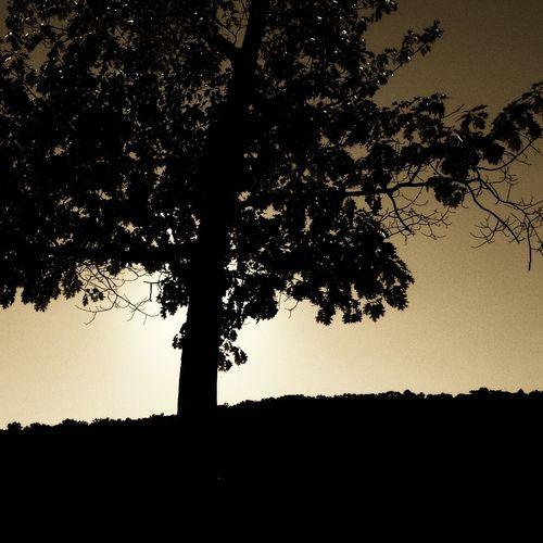 Sunset, Lynn Deming Park Sunset Silhouettes First Eyeem Photo IPSExposure