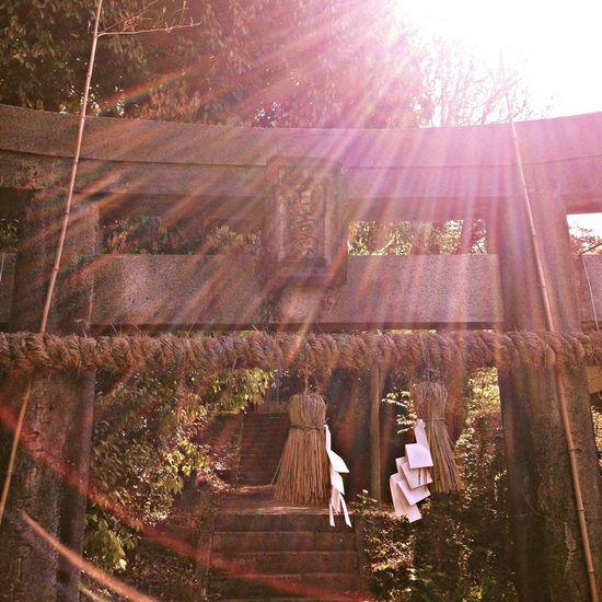神社 木洩れ陽