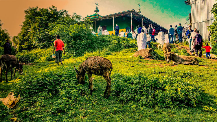 Sunday Morning Green Color Grass Outdoors Day Animal Themes EthiopianOrthodoxTewahedoChurch Worshipping Jesus Color Of Life