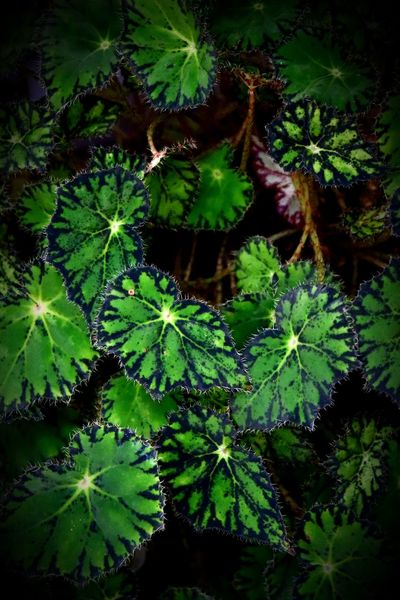 Round Dance Canon Sl2 200D 1855mm Flowers Park Plants Indoors  Darkbackground Floral Pattern Naturalpattern Nopeople Leaves Leaf Green Color Growth Nature Plant No People Beauty In Nature Close-up Freshness