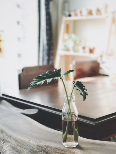 Plant in glass vase on wooden table at home