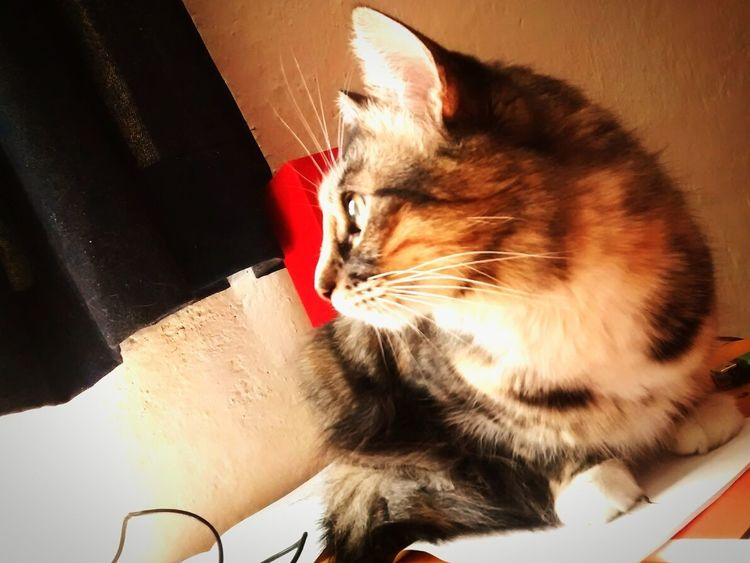Pet Photography  Catstagram MicroMadre