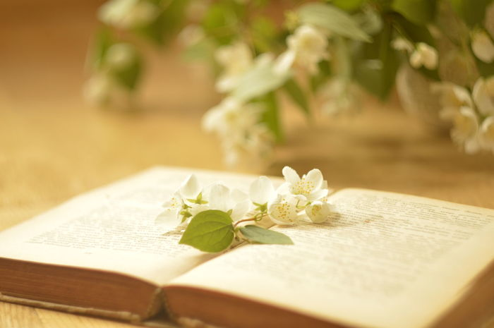 Book time The Still Life Photographer - 2018 EyeEm Awards Leaf Plant No People Close-up Flower Flower Head Nature Day Outdoors Book Jasmin Wooden Table EyeEmNewHere