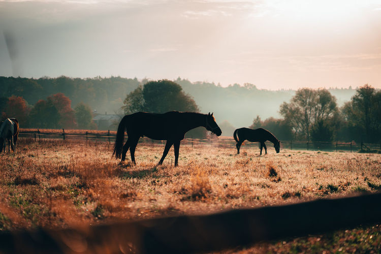 Horses standing in animal pen during sunset