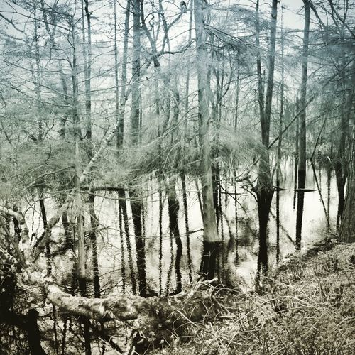 Treescollection Delamere Delamere Forest Tree Plant Land Forest No People Nature Tranquility