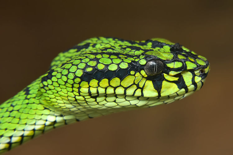 Close-up of green snake