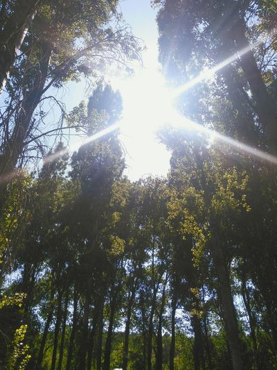 Check This Out Hello World Enjoying Life Forest Sunlight Relaxing