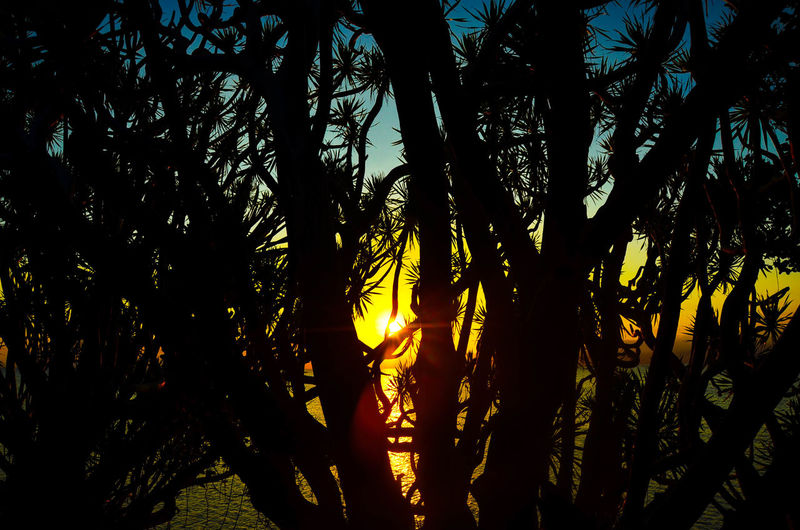 chasing the sun Sunset Awesomeearth TheGreatOutdoors Neverstopexploring  Chasingsunsets Lifeinmoments Silhouette Tree Nature Silhouette Low Angle View Growth Outdoors Beauty In Nature No People