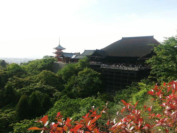 Ultimate Japan Giyozmitera Red Nature Calming
