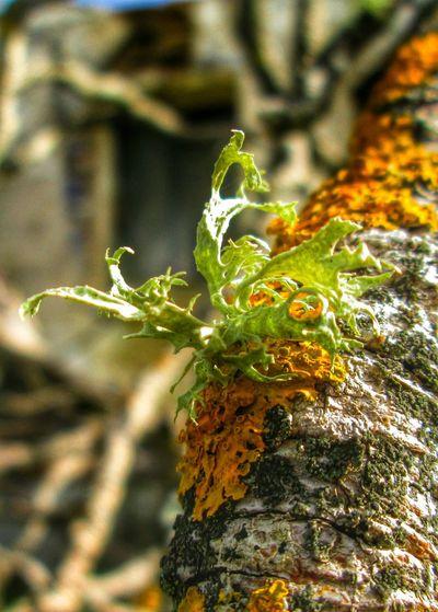 Macro_collection Macroclique EyeEm Nature Lover TreePorn