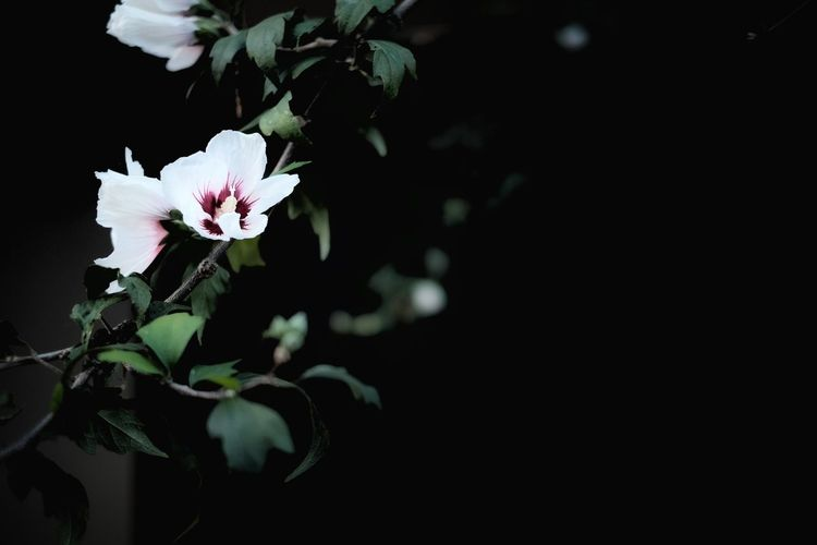 『16:14:24』 2016-10-14 Freshness Flower Fragility Petal Growth Beauty In Nature Close-up Leaf Springtime Flower Head In Bloom Blossom Nature Pink Color Branch Botany Focus On Foreground Cherry Tree Cherry Blossom Blooming Street Street Art/Graffiti Street Style From Around The World Street Photo